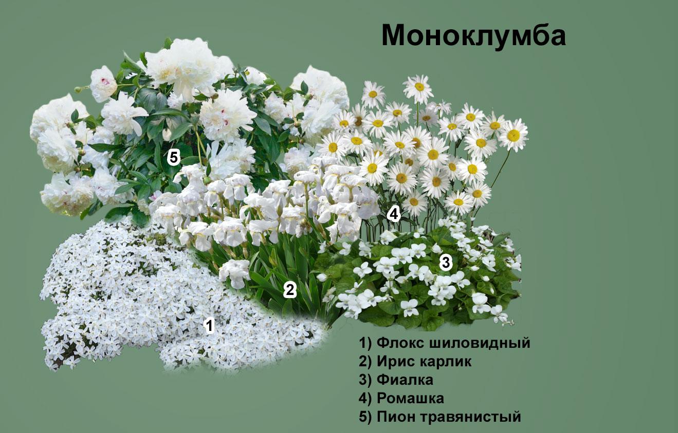 Весенне цветение все сезонной клумбы. Состав: бадан, традесканция, луковичные, лилейник, очиток и другие.